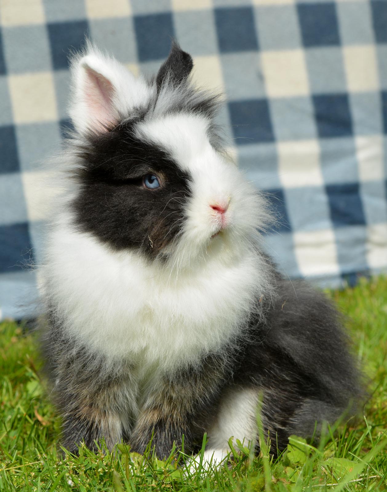 Kaninchen Janinas Tierli